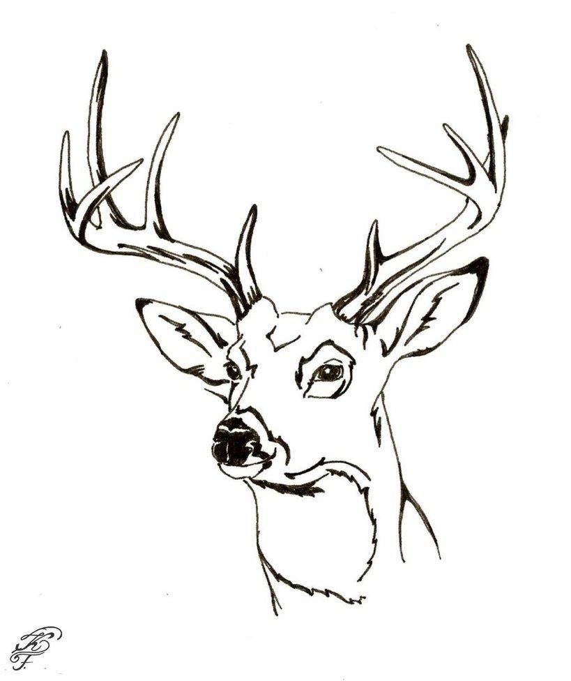 Free Deer Coloring Pages Printable Download Free Clip Art Free Clip Art On Clipart Library
