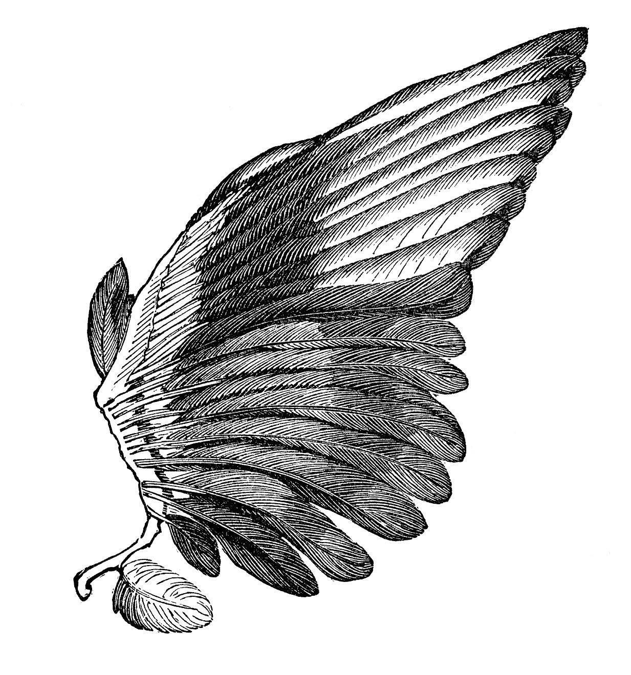 28 Angel Drawings Free Drawings Download: Free Wings Cliparts, Download Free Clip Art, Free Clip Art