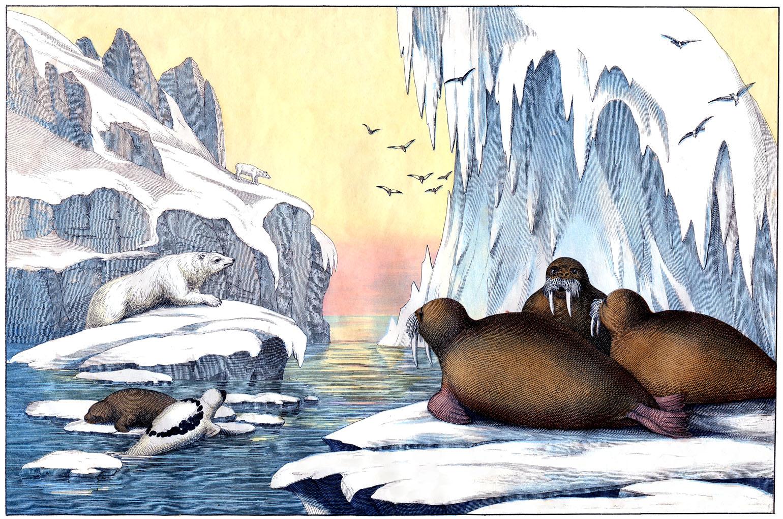Free Arctic Cliparts Download Free Clip Art Free Clip