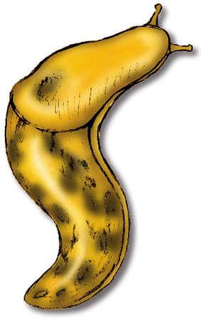 Free Slug Cliparts Download Free Clip Art Free Clip Art