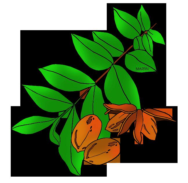 Free Pecan Cliparts Download Free Clip Art Free Clip Art