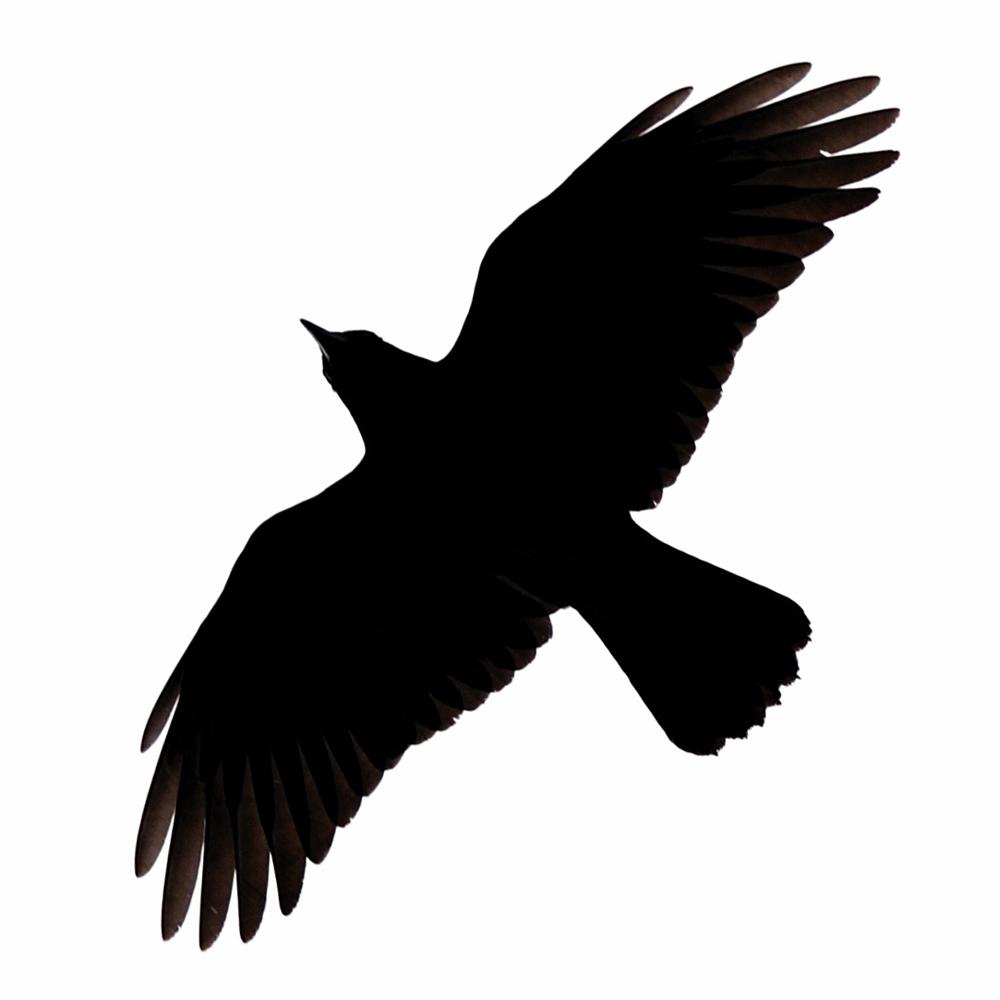 Raven Flying Clipart