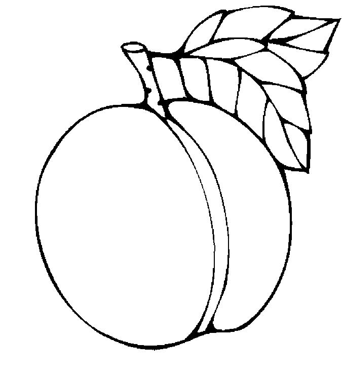 free apricot cliparts  download free clip art  free clip grandpa clipart black and white grandpa clip art free
