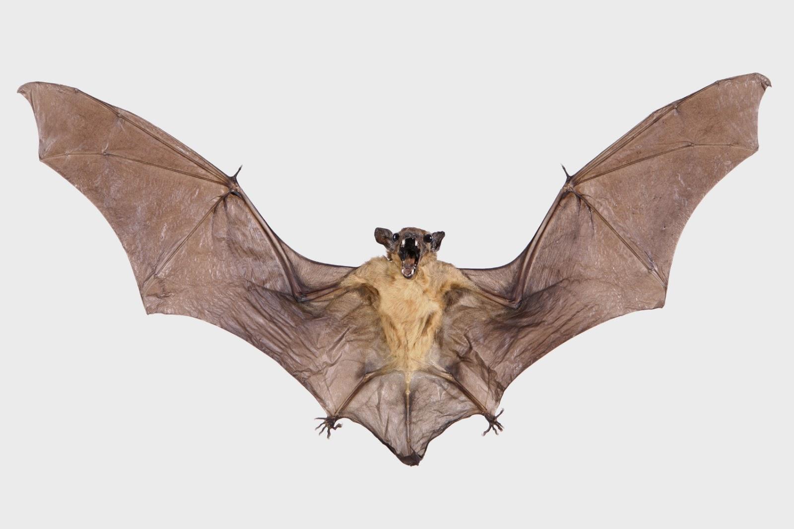 Tips And Tricks Vampire Bat