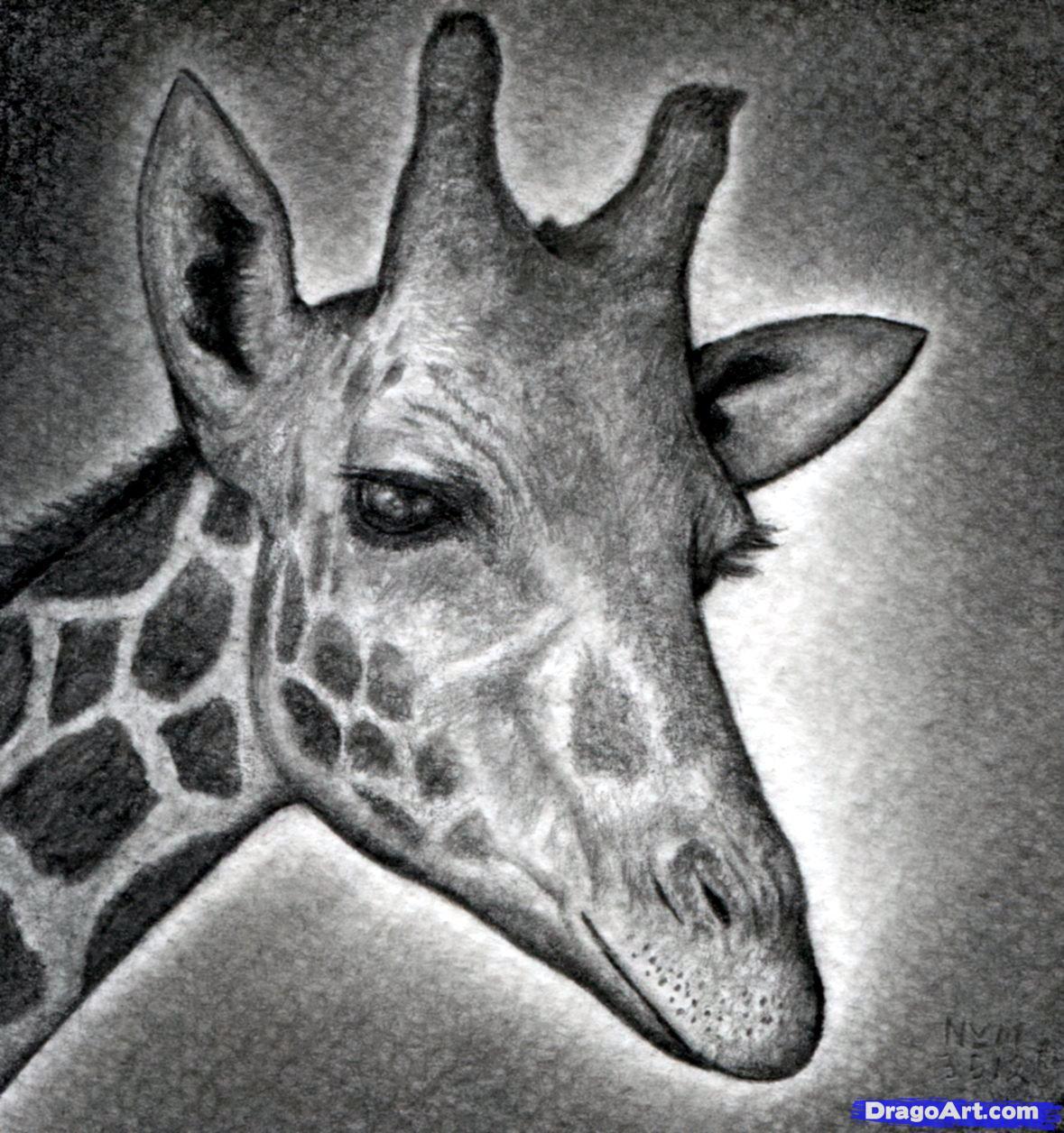 Free Animal Head Outline Giraff Download Free Clip Art