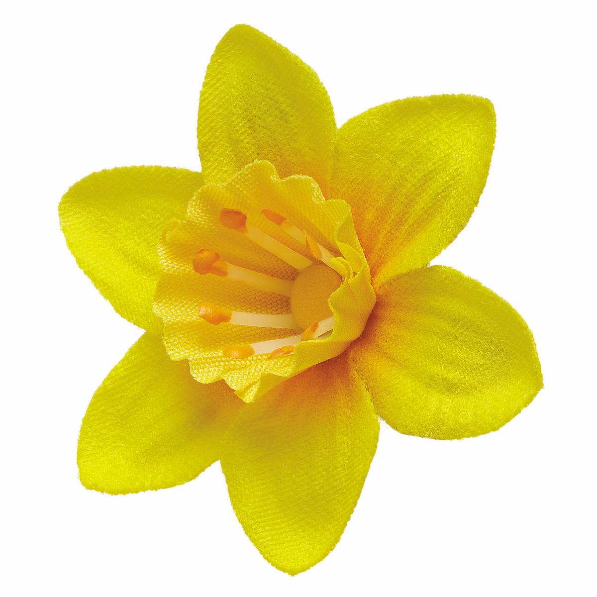 free daffodil  download free clip art  free clip art on free cheer clip art free cheer clip art