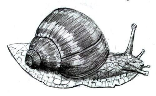 Free Snail Drawing Download Free