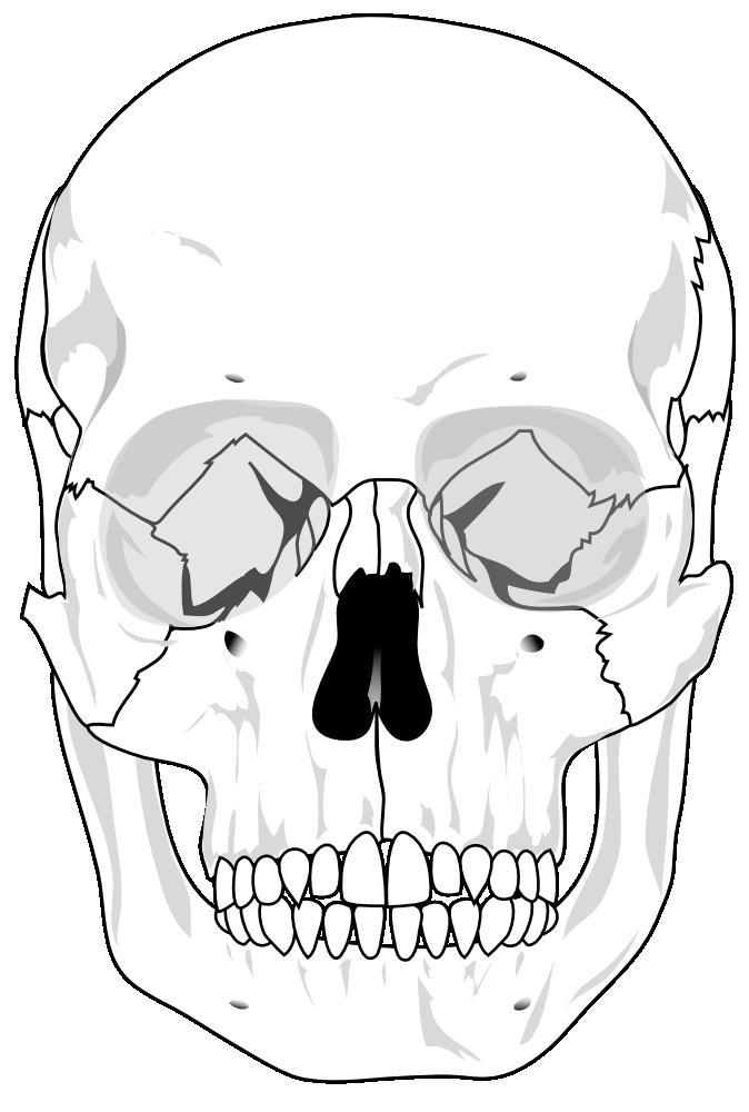 череп человека раскраска при нанесении