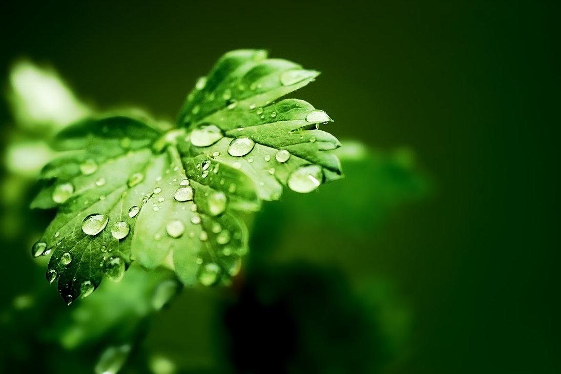 free rain drops download free clip art free clip art on
