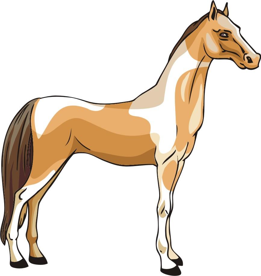 свое лошади вектор картинки если спросили цвет