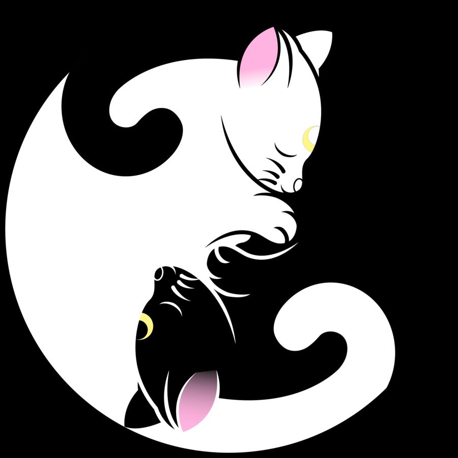 решили коты инь янь арт кошек бассейн мск радуга