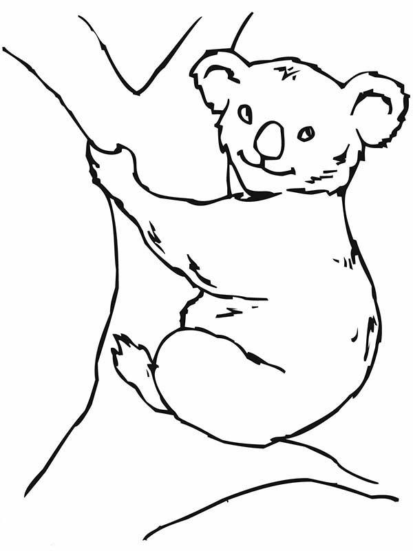 Free Clip On Koala Bears Download