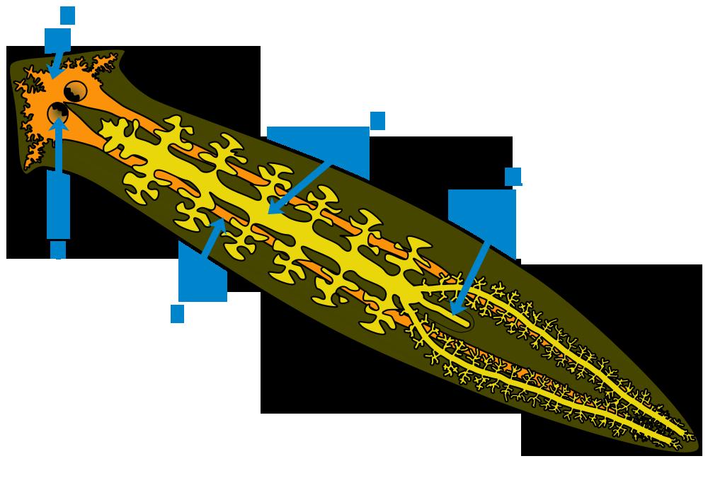 Bptqy Bi on Unlabeled Car Diagram