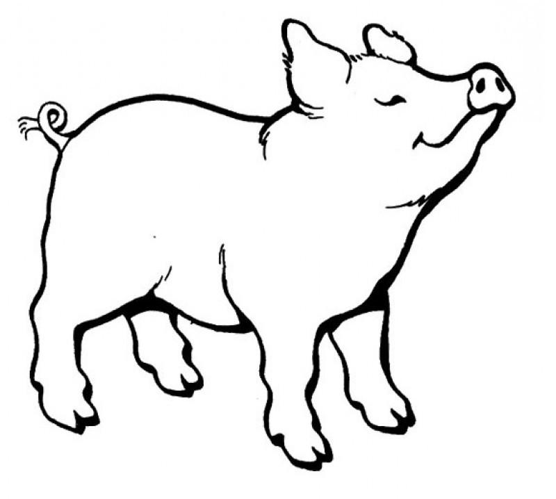 Free Pig Line Art, Download Free Clip Art, Free Clip Art
