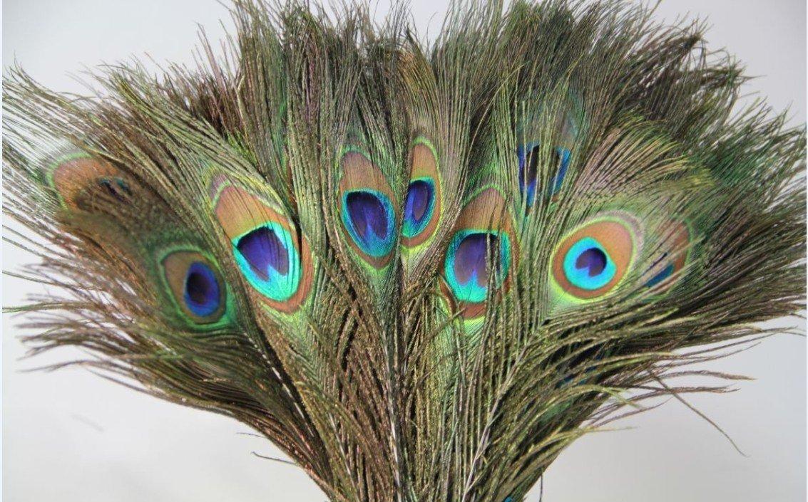 Pea Feathers Decor Ideas