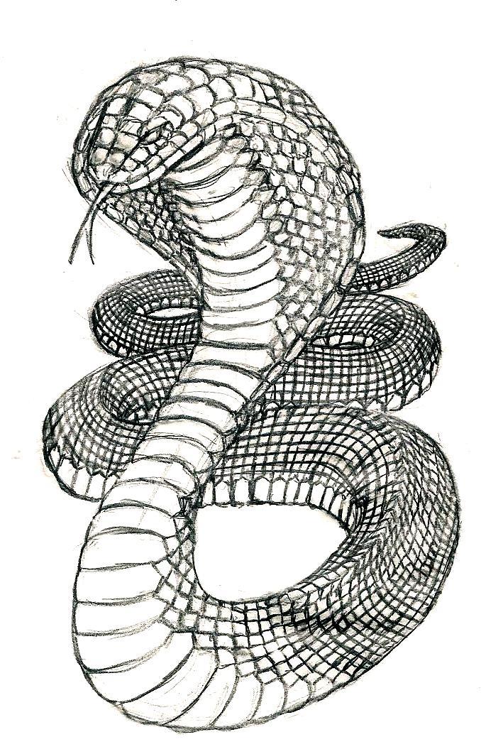 рисунки черно белые змеи стали особенно
