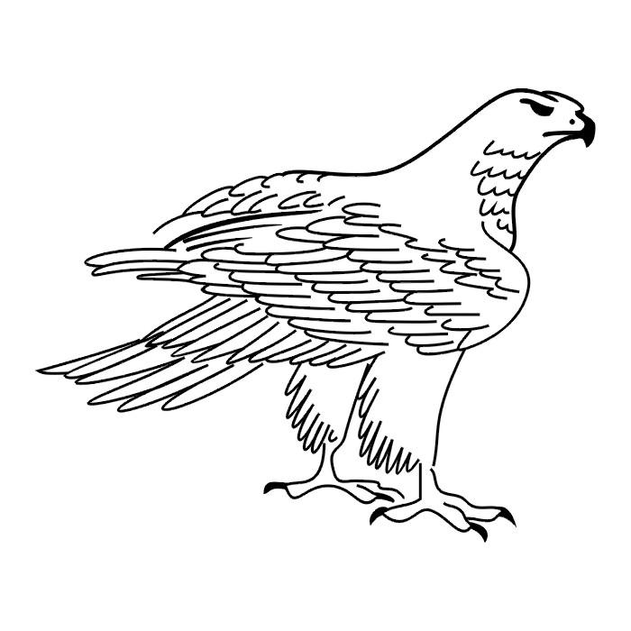Free Iowa Hawkeye Stencil Download Free Clip Art Free