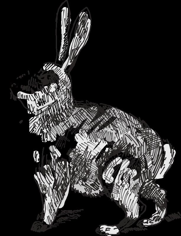 Free Rabbit Outline Download Free Clip Art Free Clip Art