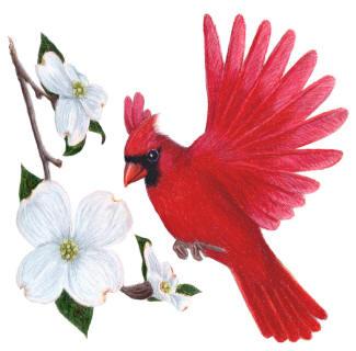 Free Ohio State Bird Download Free Clip Art Free Clip