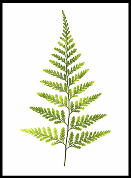 Free Fern Leaf Download Free Clip Art Free Clip Art On