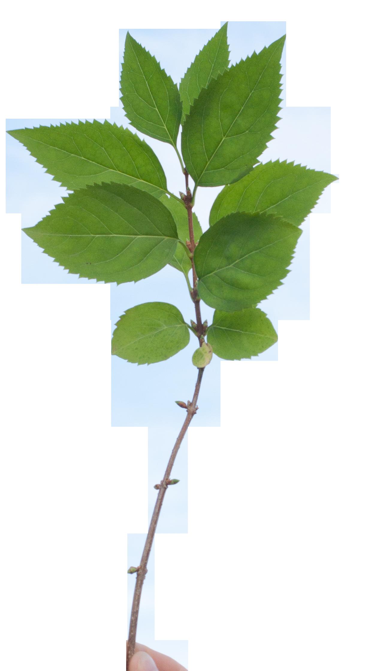 Paramecij S Vegetation Base Texture Pack Opengameart Org