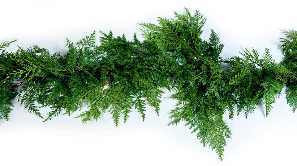 Christmas Tree Farms North Carolina