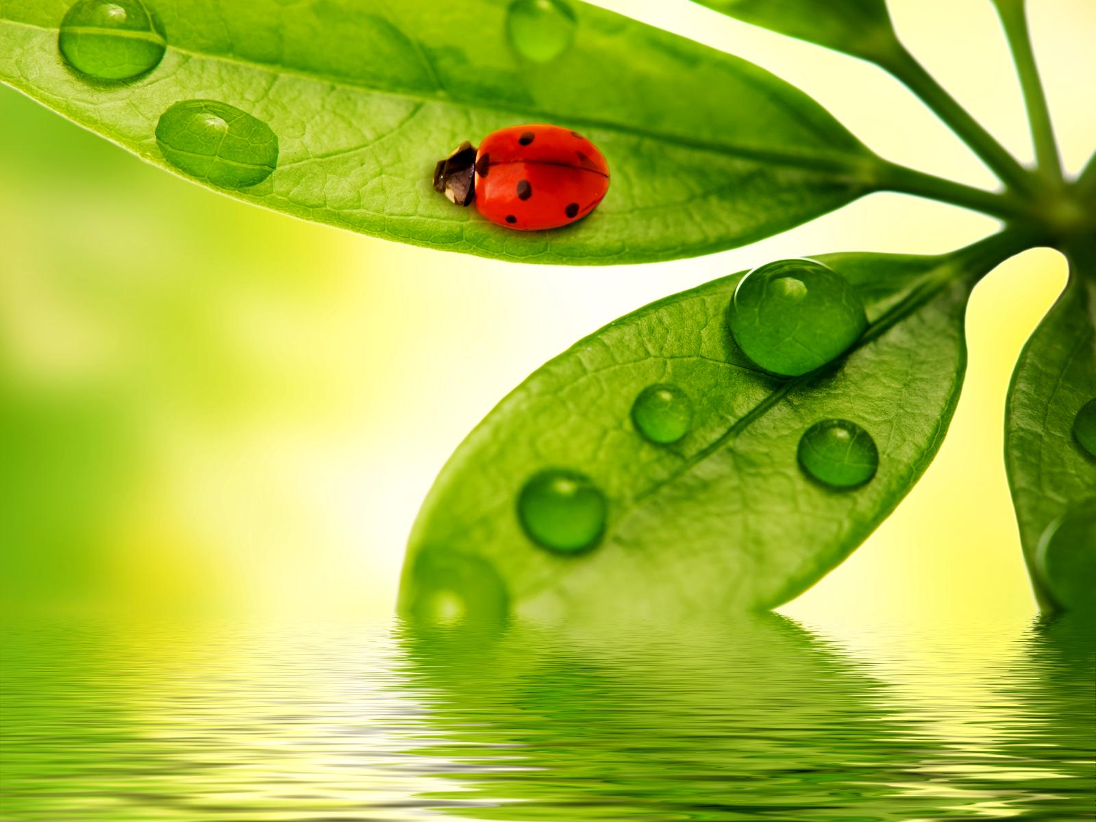 free raindrops download free clip art free clip art on