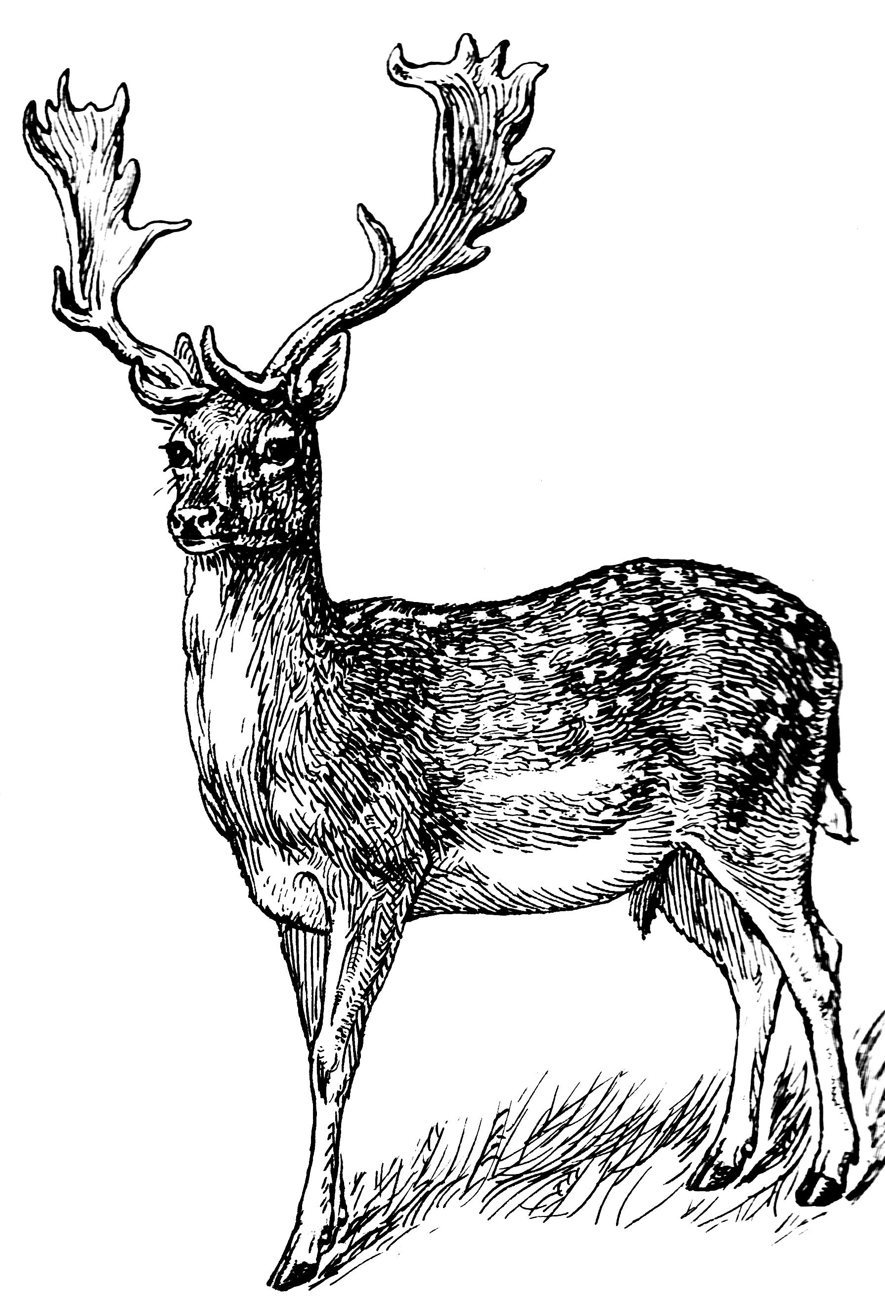 Free Deer Png Download Free Clip Art Free Clip Art On