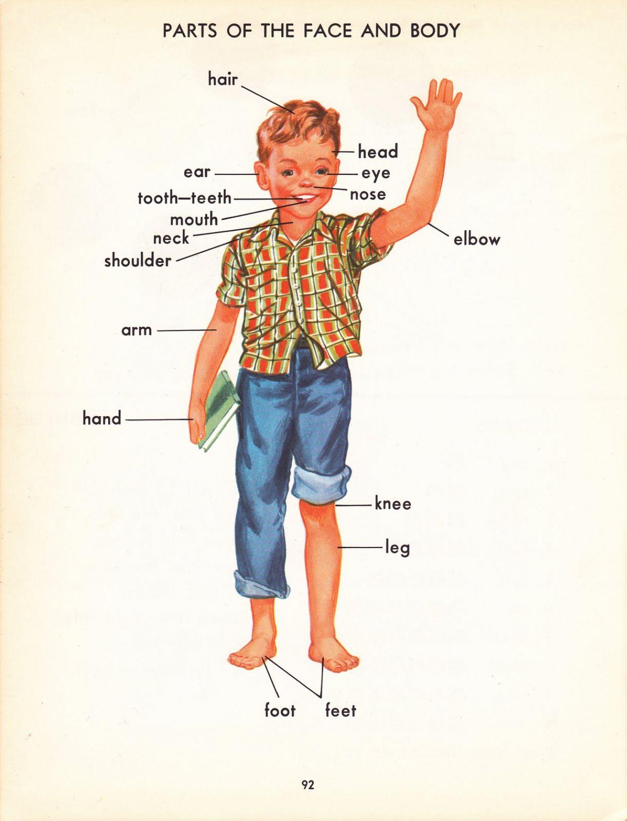 illustrated handbook of succulent plants crassulaceae