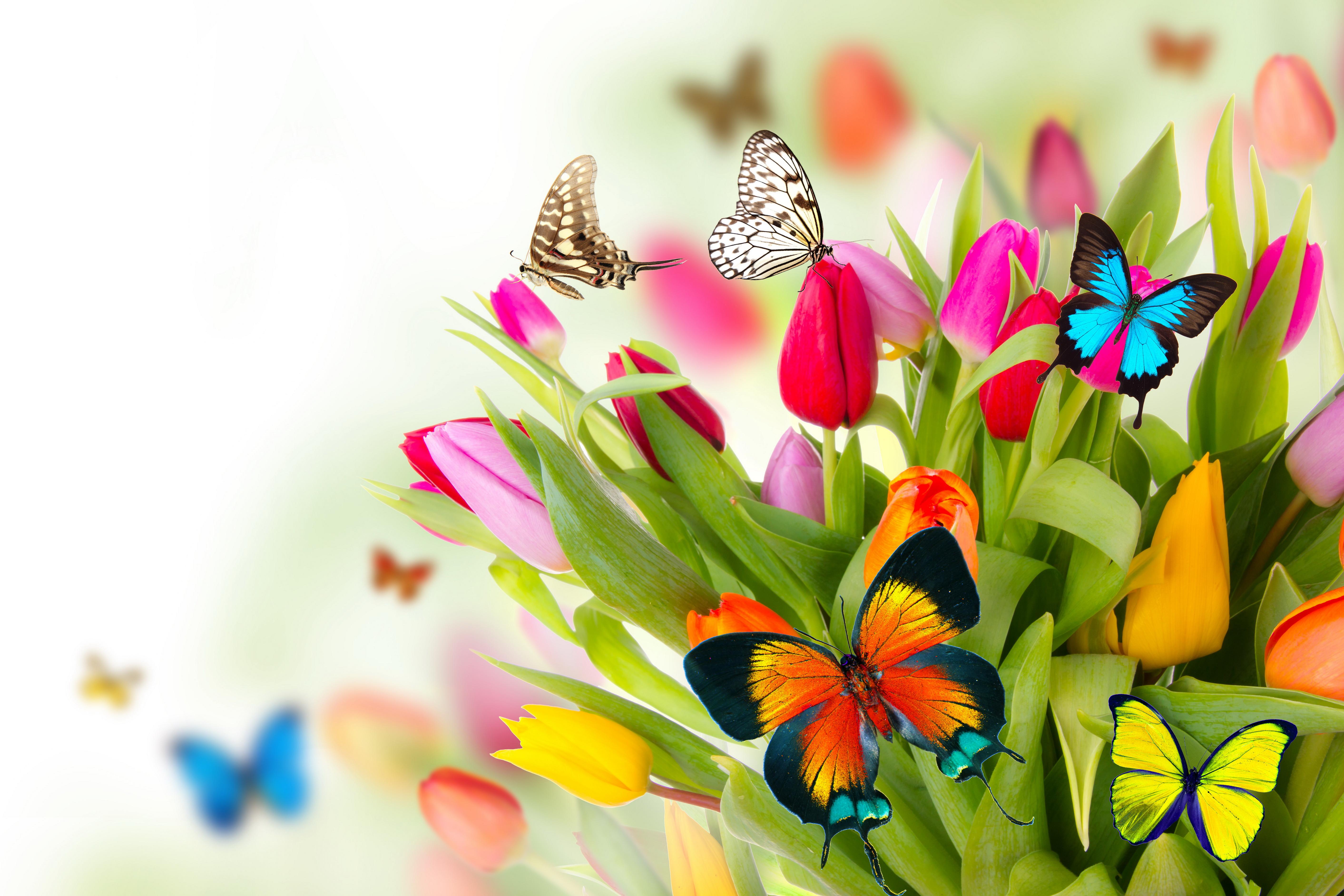 Spring Flowers Desktop Background Wallpapers Hd Free 498695