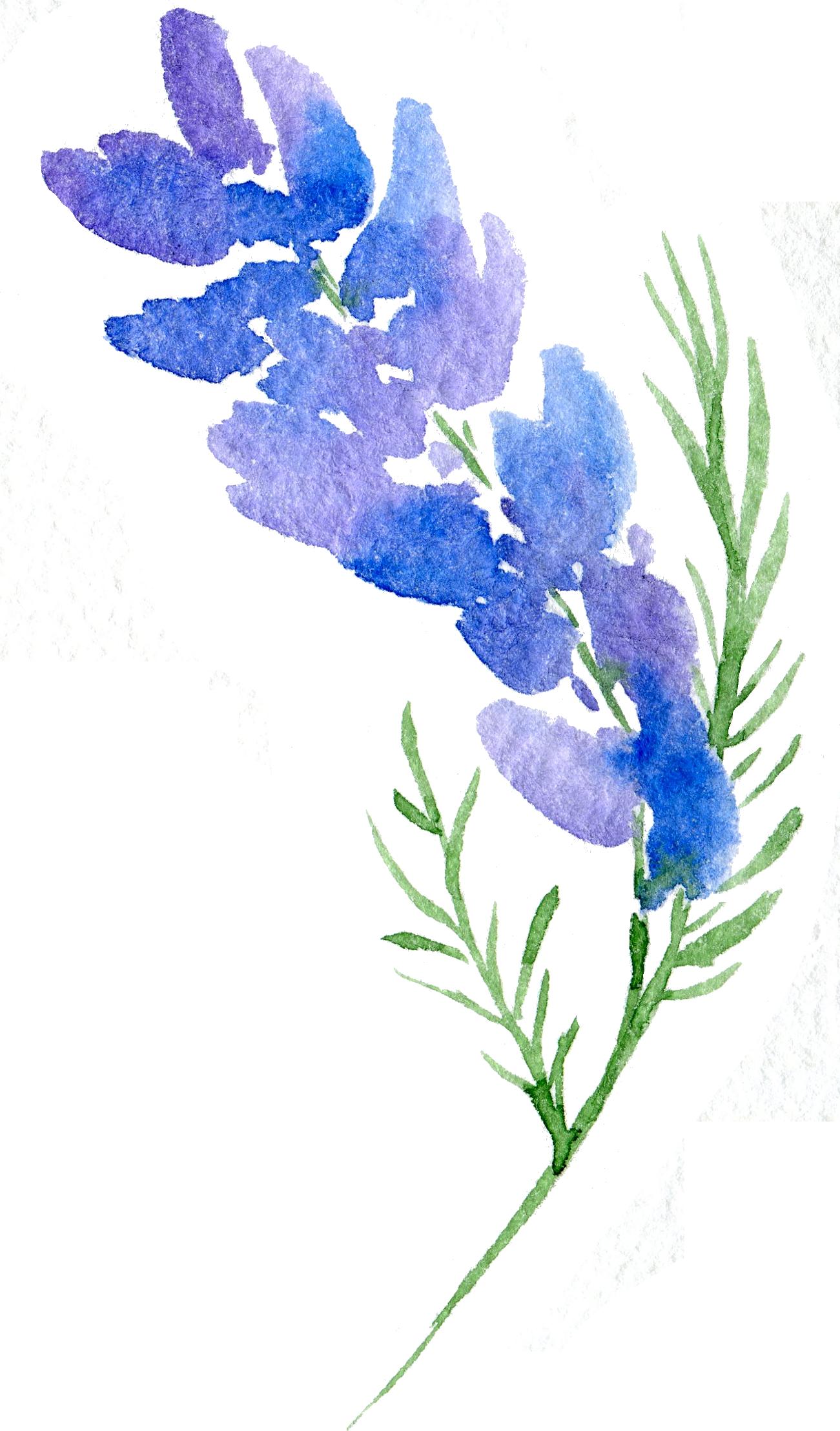 Floral Design Flower Watercolor Painting Transparent Background