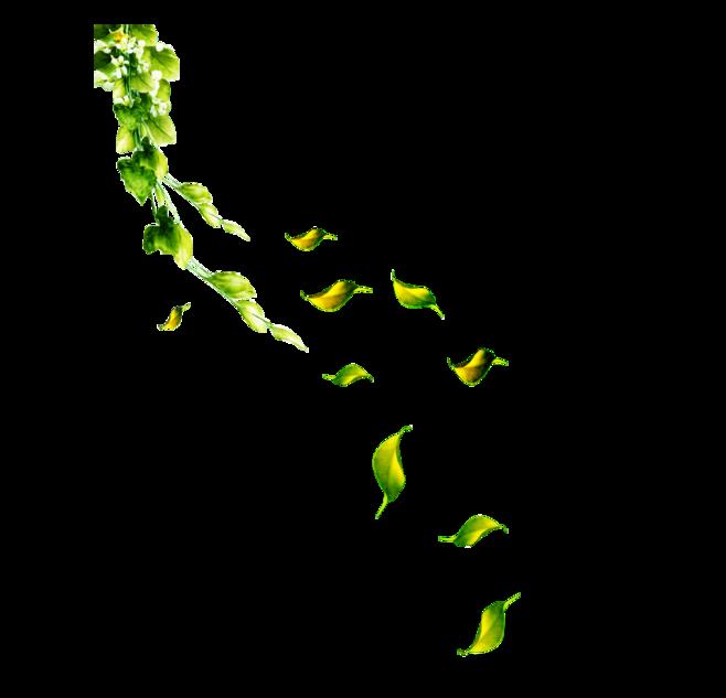 Petal Leaf Flower - Green leaves falling png download - 658*633 - Free Transparent Petal png ...