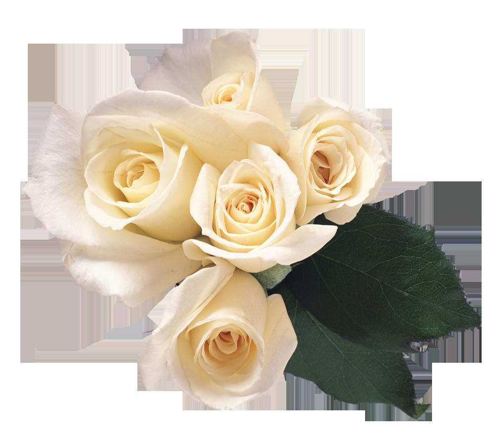 Rose Flower Clip art - white rose png download - 1000*900 - Free Transparent Rose png Download ...