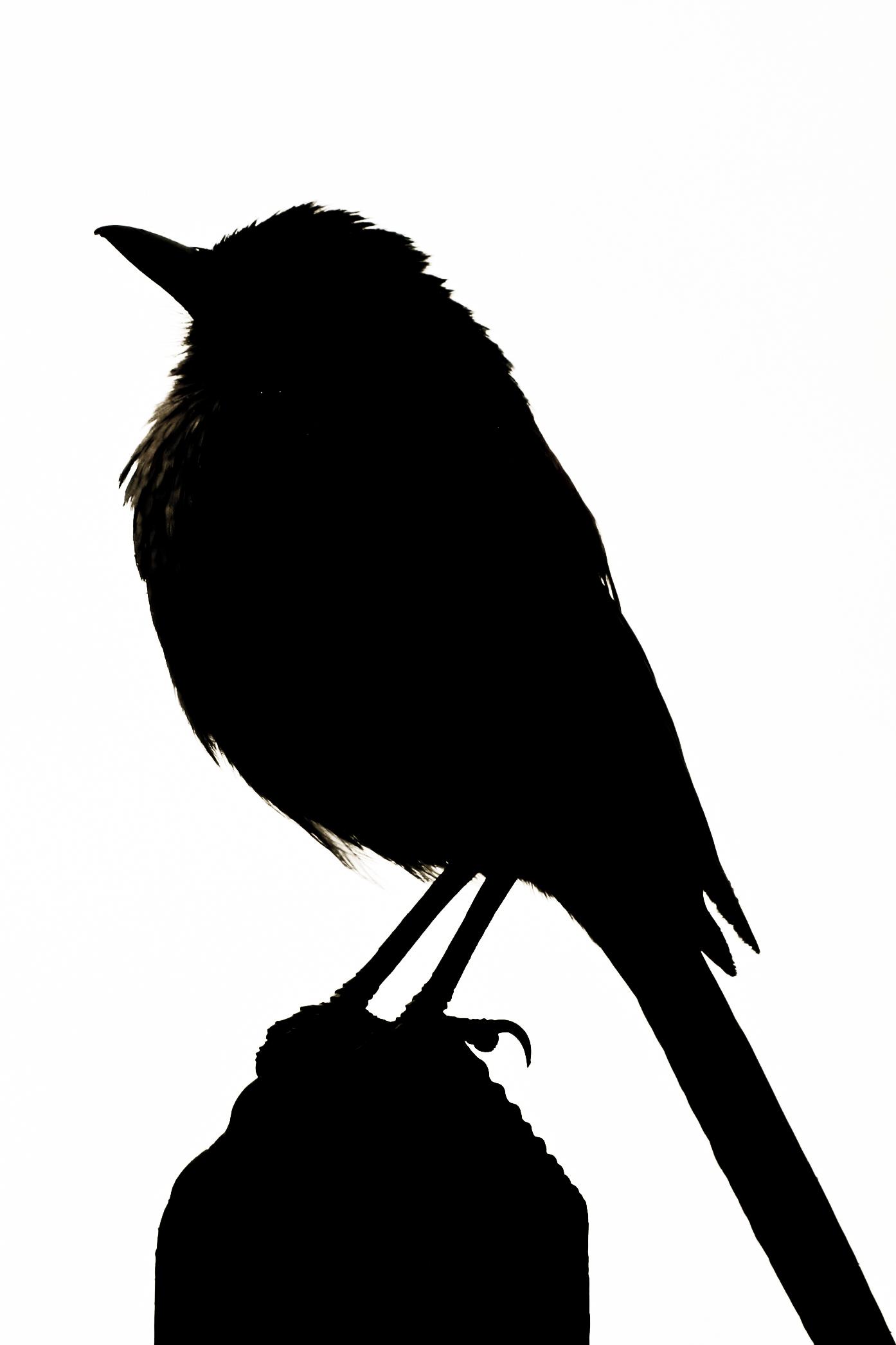 Free Raven Silhouette Cliparts
