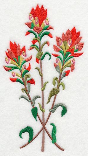 Indian paintbrush clipart