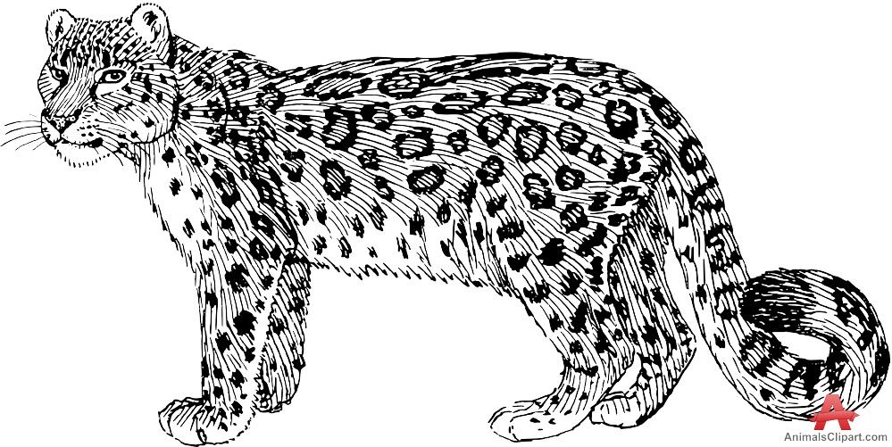 free snow leopard cliparts download free clip art free clip art on clipart library. Black Bedroom Furniture Sets. Home Design Ideas