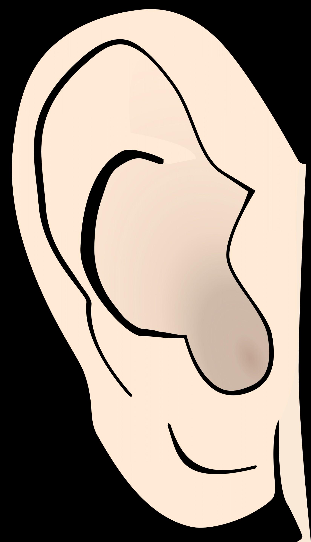 Free Big Ear Cliparts Download Free Clip Art Free Clip