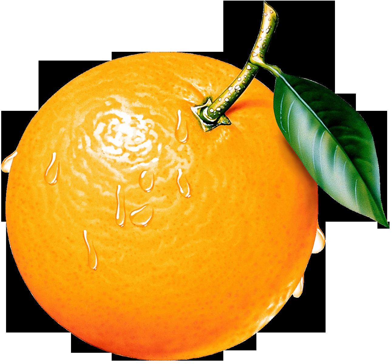 Free Orange Fruit Png Download Free Clip Art Free Clip Art On